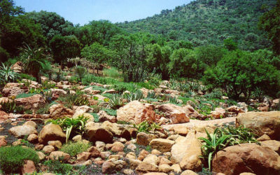 The Witwatersrand Basin in South Africa and how it acquired its gold reefs